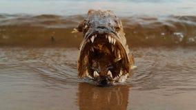 Pesce morto Fotografia Stock Libera da Diritti