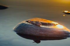 Pesce morto sul mare immagine stock libera da diritti