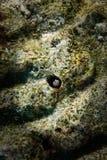 Pesce nei coralli Fotografia Stock Libera da Diritti