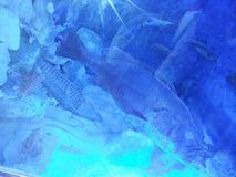 Pesce nel mar Mediterraneo Fotografie Stock