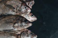 Pesce organico fresco su ghiaccio sul mercato sul primo piano d'annata scuro del fondo immagini stock libere da diritti