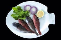 Pesce pappagallo Mediterraneo con le foglie dei razzi servite sul piatto bianco immagine stock libera da diritti