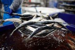 Pesce per elaborare Immagine Stock