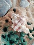 Pesce pesca конематки Chiocciola голубое стоковое изображение rf