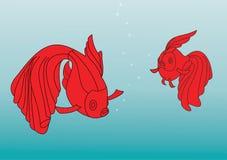 Pesce, pesce rosso Immagini Stock