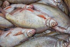 Pesce pulito da vendere, fondo del pesce fotografie stock libere da diritti