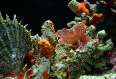 Pesce rosa di Camoflage Fotografie Stock Libere da Diritti