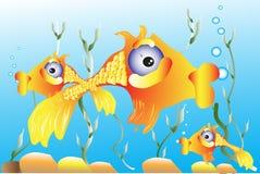 Pesce rosso Immagini Stock