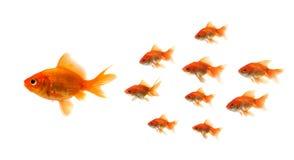 Pesce rosso che esamina l'esca immagine stock libera da diritti