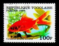 Pesce rosso del girante laterale (carassius auratus), serie, circa 1999 Immagine Stock Libera da Diritti