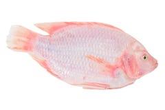 Pesce rosso di tilapia Fotografie Stock