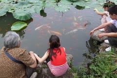 Pesce rosso e carpa Immagine Stock