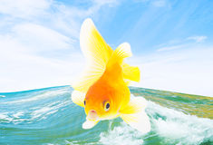 Pesce rosso e mare Immagine Stock