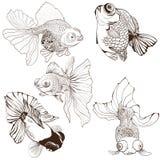 Pesce rosso - insieme dei disegni di vettore Usi i materiali stampati, i segni, i manifesti, cartoline, imballanti Immagini Stock Libere da Diritti