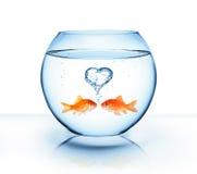 Pesce rosso nell'amore Fotografie Stock Libere da Diritti