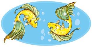 Pesce rosso nella corona Immagini Stock Libere da Diritti