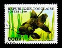 Pesce rosso nero del telescopio (carassius auratus), serie, circa 1999 Immagine Stock Libera da Diritti