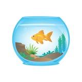 Pesce rosso in un fishbow Fotografie Stock Libere da Diritti