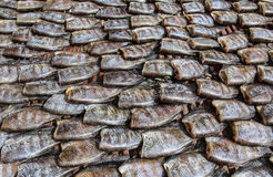 Pesce salato dello spinefoot. Fotografia Stock
