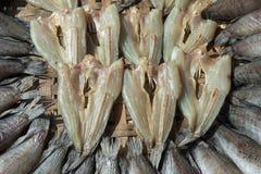 Pesce secco della serpente-testa Immagini Stock
