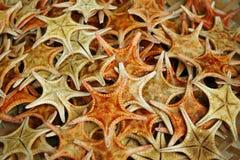 Pesce secco della stella su esposizione al mercato in Hong Kong Immagine Stock