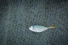 Pesce secco e salato e reti da pesca sui precedenti di legno Fotografia Stock