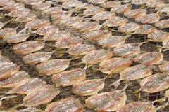 Pesce secco su nylon Fotografia Stock