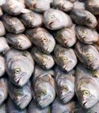 Pesce serra fresco Immagine Stock