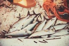 Pesce serra preso sul fondo del peschereccio Immagine Stock