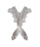 Pesce siamese di combattimento del platino bianco di Platt Fighti siamese bianco Fotografia Stock Libera da Diritti
