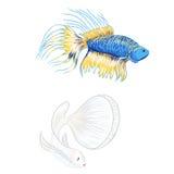 Pesce siamese disegnato a mano di combattimento, bello pesce Immagine Stock