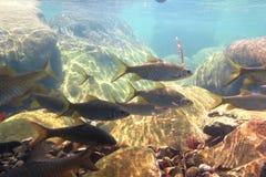 Pesce sotto la cascata fotografia stock libera da diritti