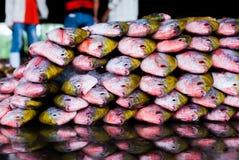 Pesce su ghiaccio Fotografie Stock Libere da Diritti