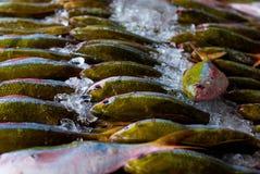 Pesce su ghiaccio Immagini Stock Libere da Diritti