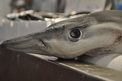Pesce su un mercato ittico Fotografia Stock