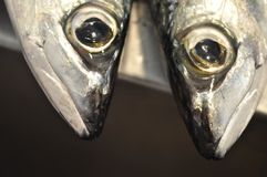 Pesce sul mercato Fotografie Stock Libere da Diritti