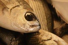 Pesce sul mercato Immagini Stock Libere da Diritti