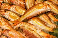 Pesce sul mercato del mare Frutti di mare immagini stock libere da diritti