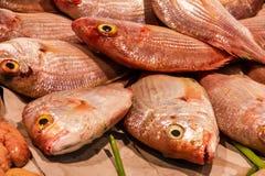 Pesce sul mercato Frutti di mare, Spagna fotografia stock libera da diritti