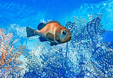 Pesce sulla scogliera - illustrazione 3d Immagine Stock
