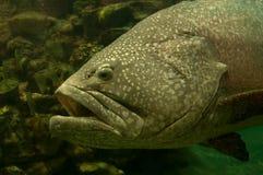 Pesce tropicale fotografie stock