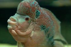 Pesce tropicale fotografia stock