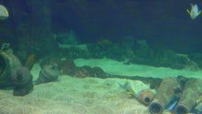 Pesce tropicale dell'oceano in acquario dell'acqua di mare video d archivio