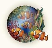 Pesce tropicale della carta subacquea Immagine Stock Libera da Diritti