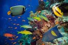 Pesce tropicale e barriera corallina Immagini Stock Libere da Diritti