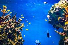 Pesce tropicale e barriera corallina in oceano Fotografia Stock