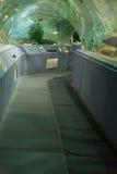 Pesce in tunnel acquatico immagini stock libere da diritti