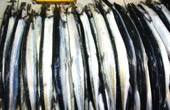 Pesce variopinto da vendere Immagine Stock