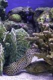 Pesce variopinto nei precedenti del mare il corallo, Tailandia immagini stock