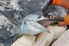 Pesce vela del Pacifico Fotografia Stock Libera da Diritti